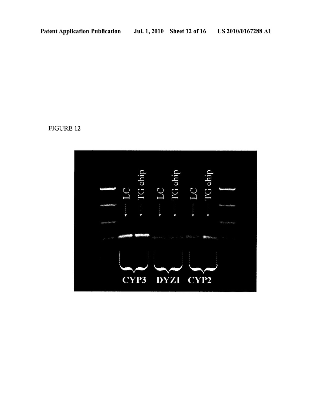 Methods and Compositions Related to Continuous Flow Thermal Gradient PCR - diagram, schematic, and image 13