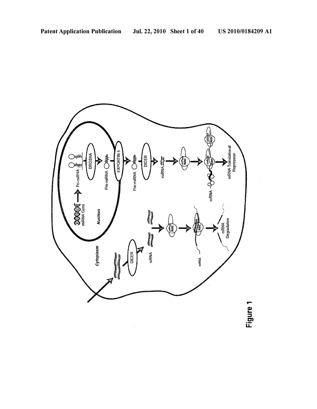 COMPOSITIONS AND METHODS FOR INHIBITING GENE SILENCING BY RNA INTERFERENCE - diagram, schematic, and image 02
