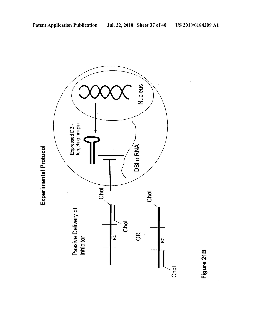 COMPOSITIONS AND METHODS FOR INHIBITING GENE SILENCING BY RNA INTERFERENCE - diagram, schematic, and image 38