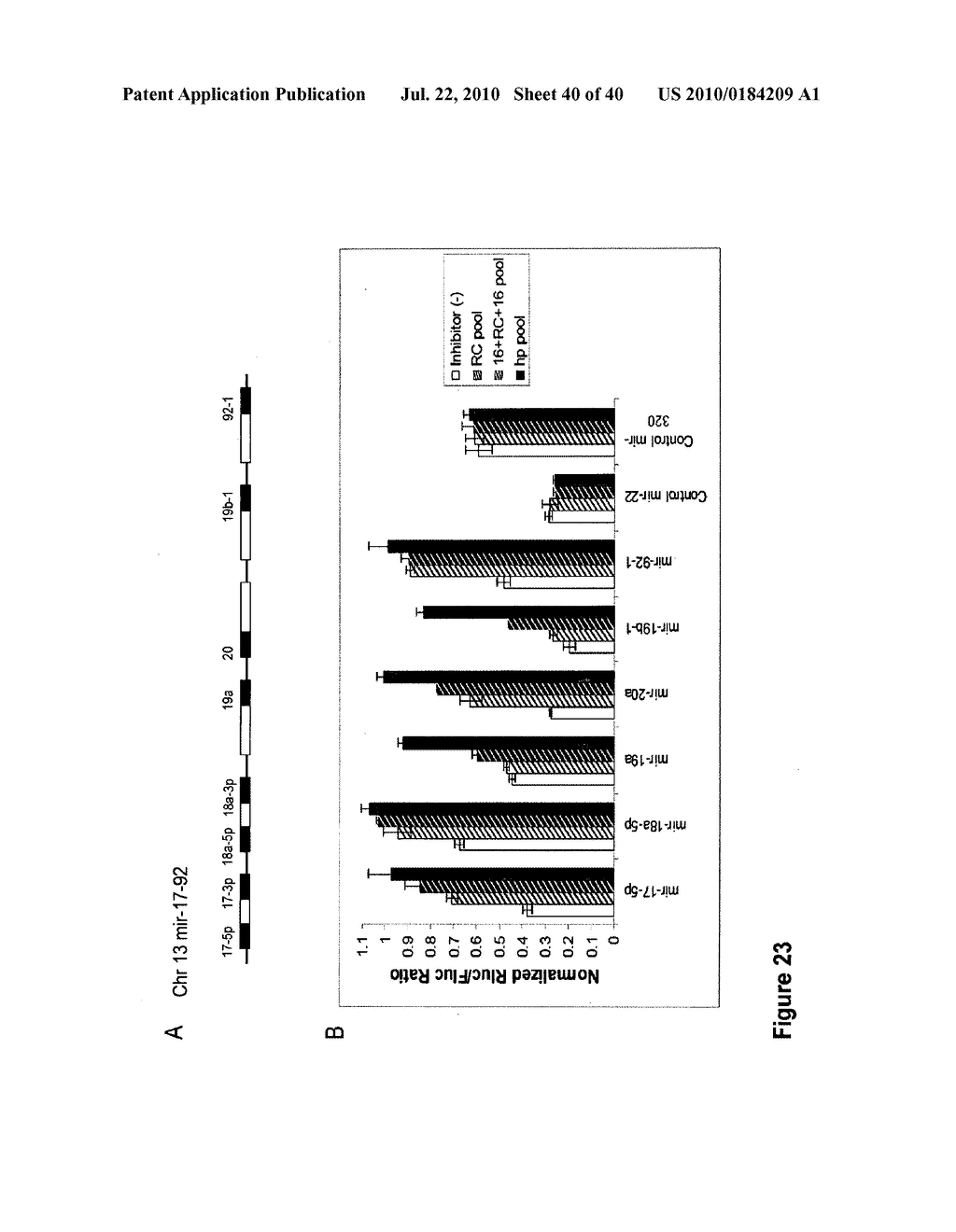 COMPOSITIONS AND METHODS FOR INHIBITING GENE SILENCING BY RNA INTERFERENCE - diagram, schematic, and image 41