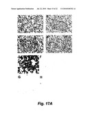 Selective High-Affinity Polydentate Ligands and Methods of Making Such diagram and image