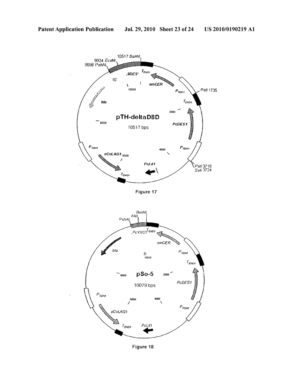 PRODUCTION OF SPHINGOID BASES USING GENETICALLY ENGINEERED MICROBIAL STRAINS - diagram, schematic, and image 24