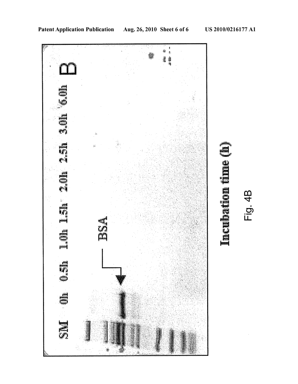 METHOD AND KIT FOR UNIVERSAL VERIFICATION OF ENZYME ACTIVITY AND PROTEIN DIGESTION - diagram, schematic, and image 07