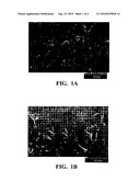 TEXTURED SILICON SUBSTRATE AND METHOD diagram and image