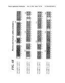 VASCULAR ADHESION MOLECULES AND MODULATION OF THEIR FUNCTION diagram and image