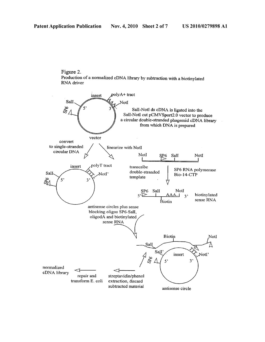 NORMALIZED NUCLEIC ACID LIBRARIES AND METHODS OF PRODUCTION THEREOF - diagram, schematic, and image 03