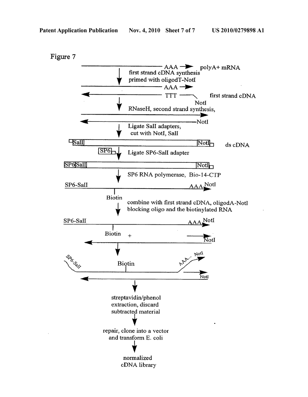 NORMALIZED NUCLEIC ACID LIBRARIES AND METHODS OF PRODUCTION THEREOF - diagram, schematic, and image 08