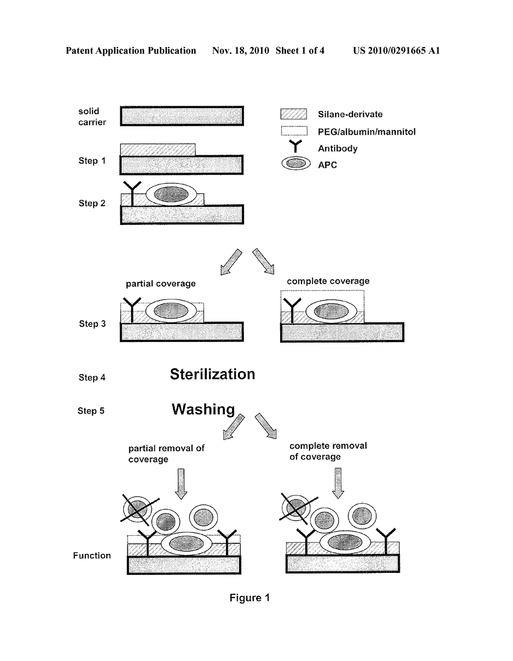 BIOCOMPATIBLE THREE DIMENSIONAL MATRIX FOR THE IMMOBILIZATION OF BIOLOGICAL SUBSTANCES - diagram, schematic, and image 02