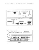 Micrornas That Regulate Muscle Cell Proliferation and Differentiation diagram and image