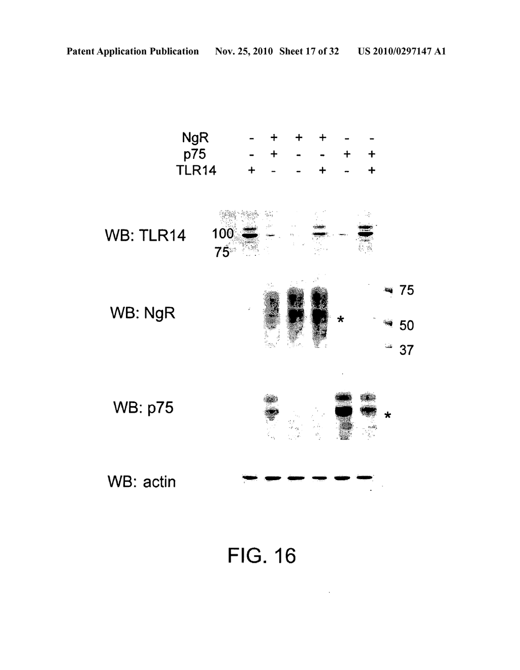 COMPOSITIONS AND METHODS FOR MODULATING TLR14 ACTIVITY - diagram, schematic, and image 18