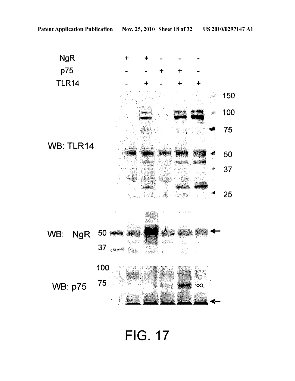 COMPOSITIONS AND METHODS FOR MODULATING TLR14 ACTIVITY - diagram, schematic, and image 19