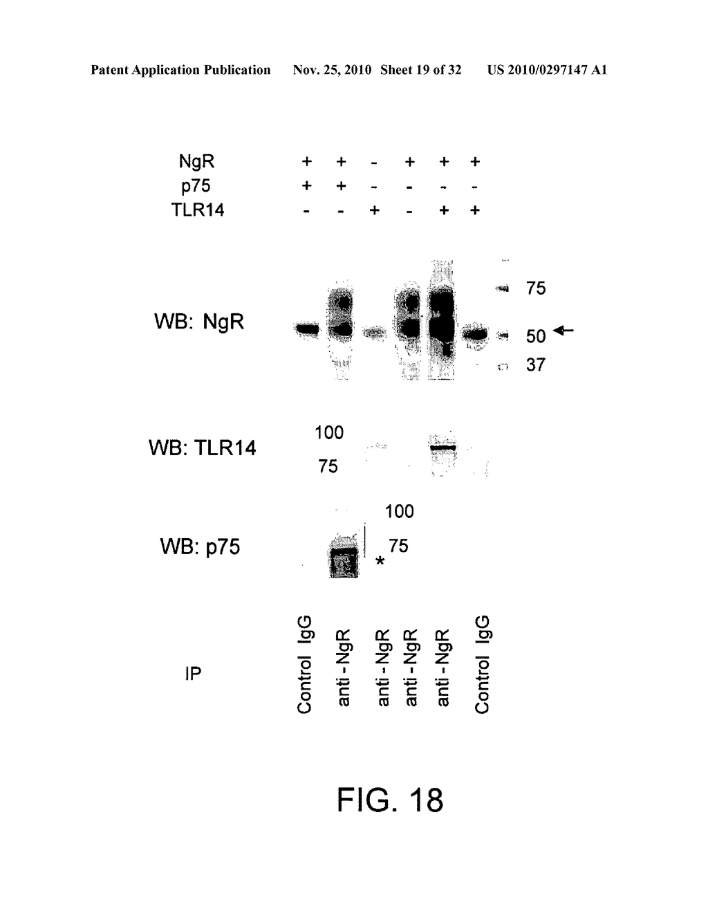 COMPOSITIONS AND METHODS FOR MODULATING TLR14 ACTIVITY - diagram, schematic, and image 20