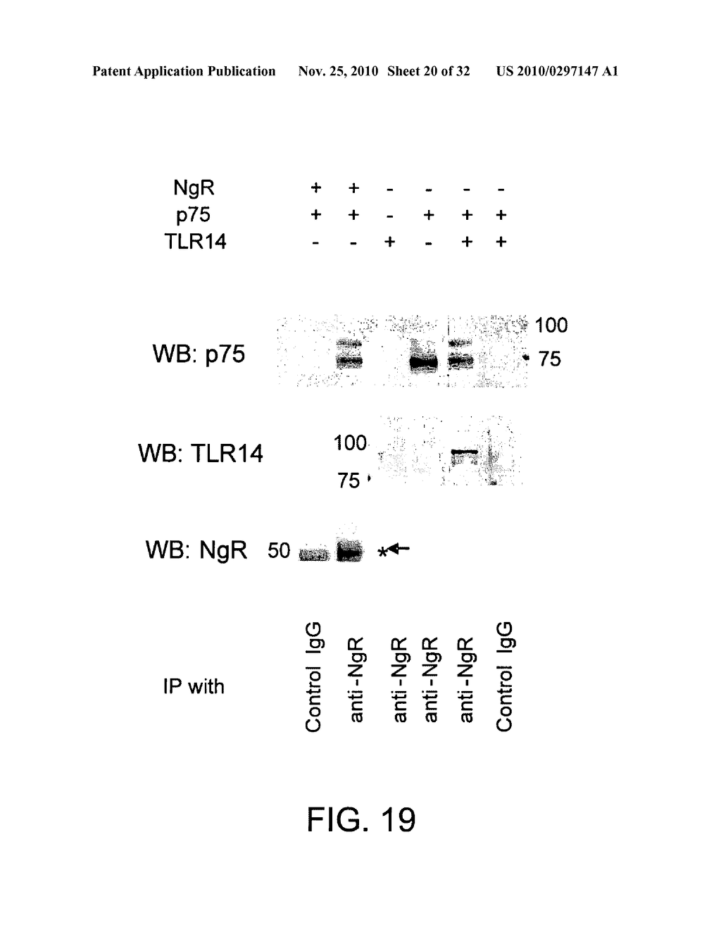 COMPOSITIONS AND METHODS FOR MODULATING TLR14 ACTIVITY - diagram, schematic, and image 21