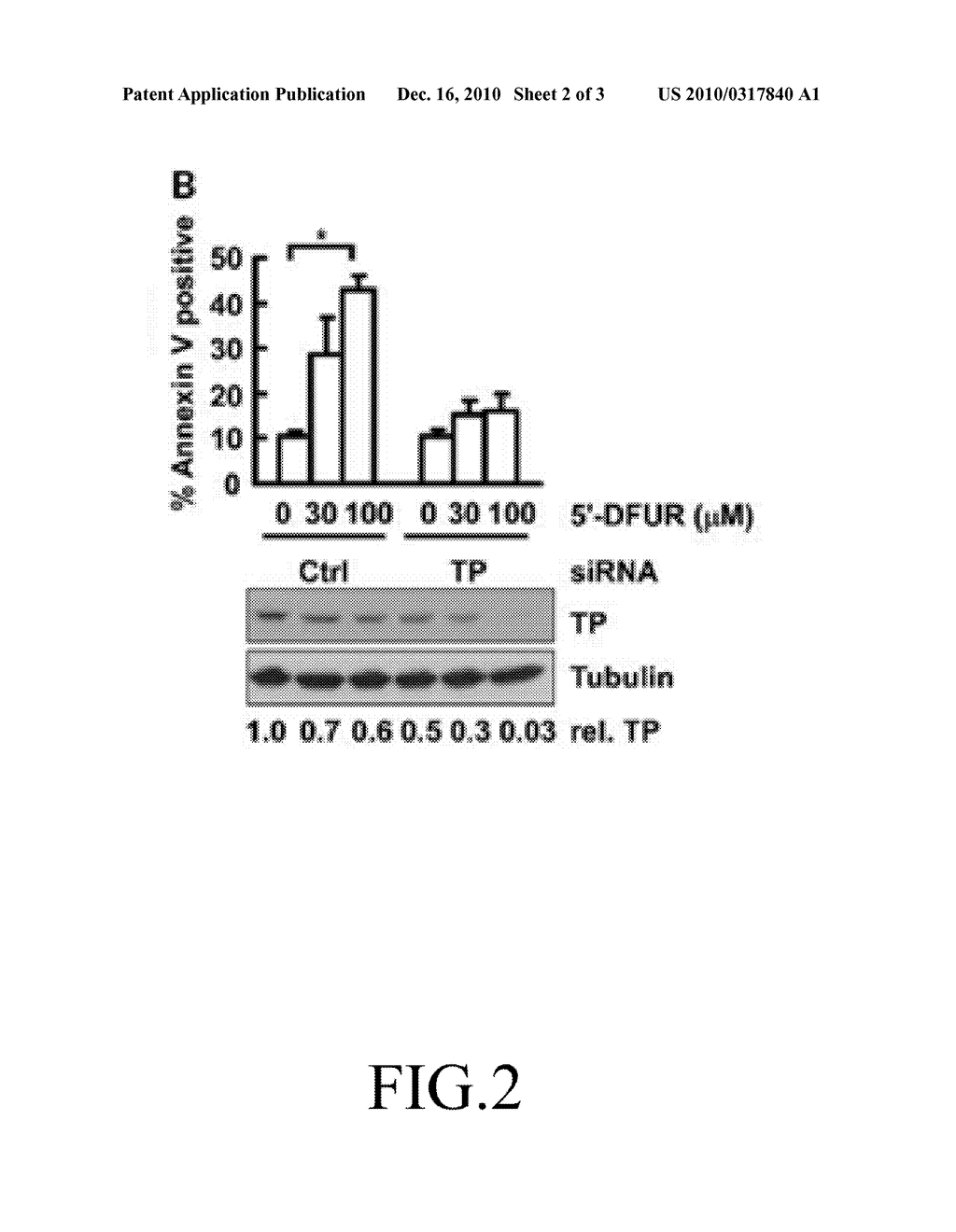 hnRNP K EXPRESSION-INHIBITING COMPOUND AND SIRNA SEQUENCE THEREOF - diagram, schematic, and image 03