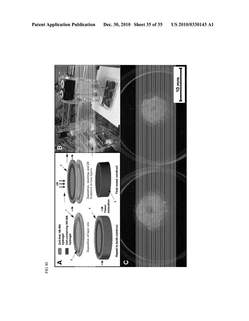 MODIFIED MACROMOLECULES AND METHODS OF MAKING AND USING THEREOF - diagram, schematic, and image 36