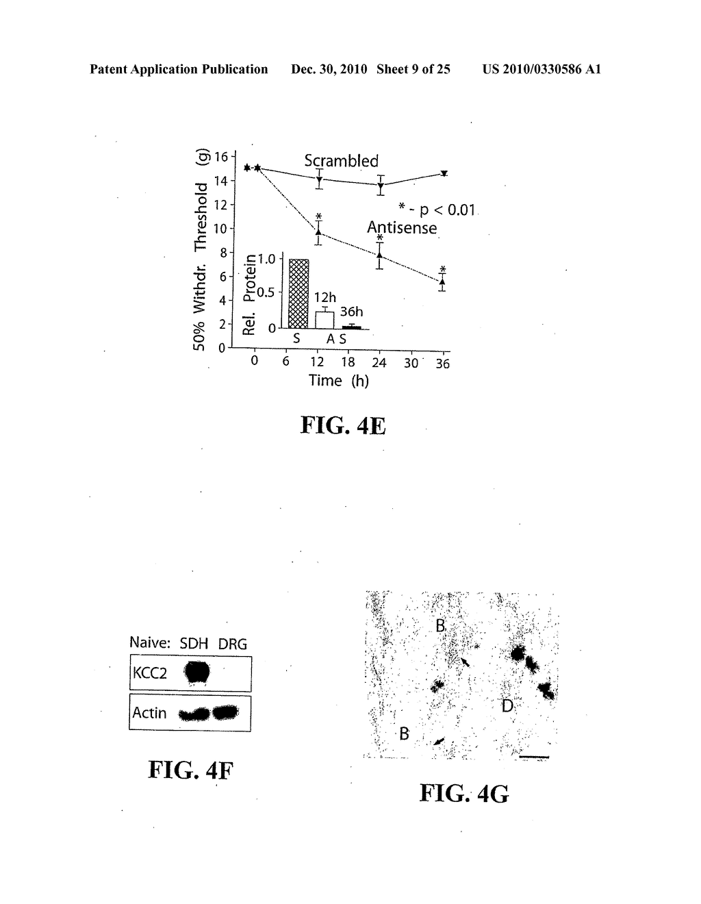 METHOD FOR IDENTIFYING COMPOUNDS FOR TREATMENT OF PAIN - diagram, schematic, and image 10