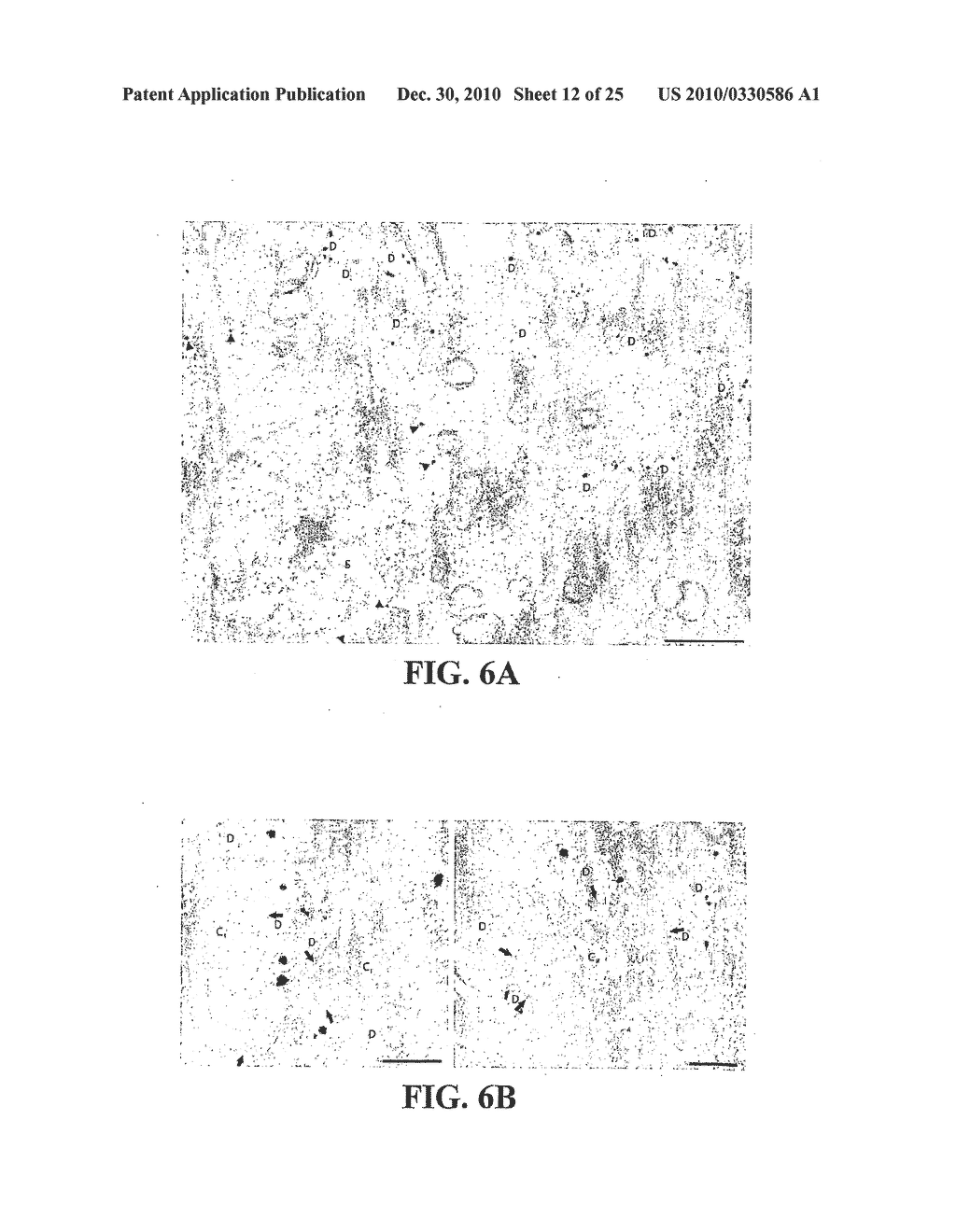 METHOD FOR IDENTIFYING COMPOUNDS FOR TREATMENT OF PAIN - diagram, schematic, and image 13