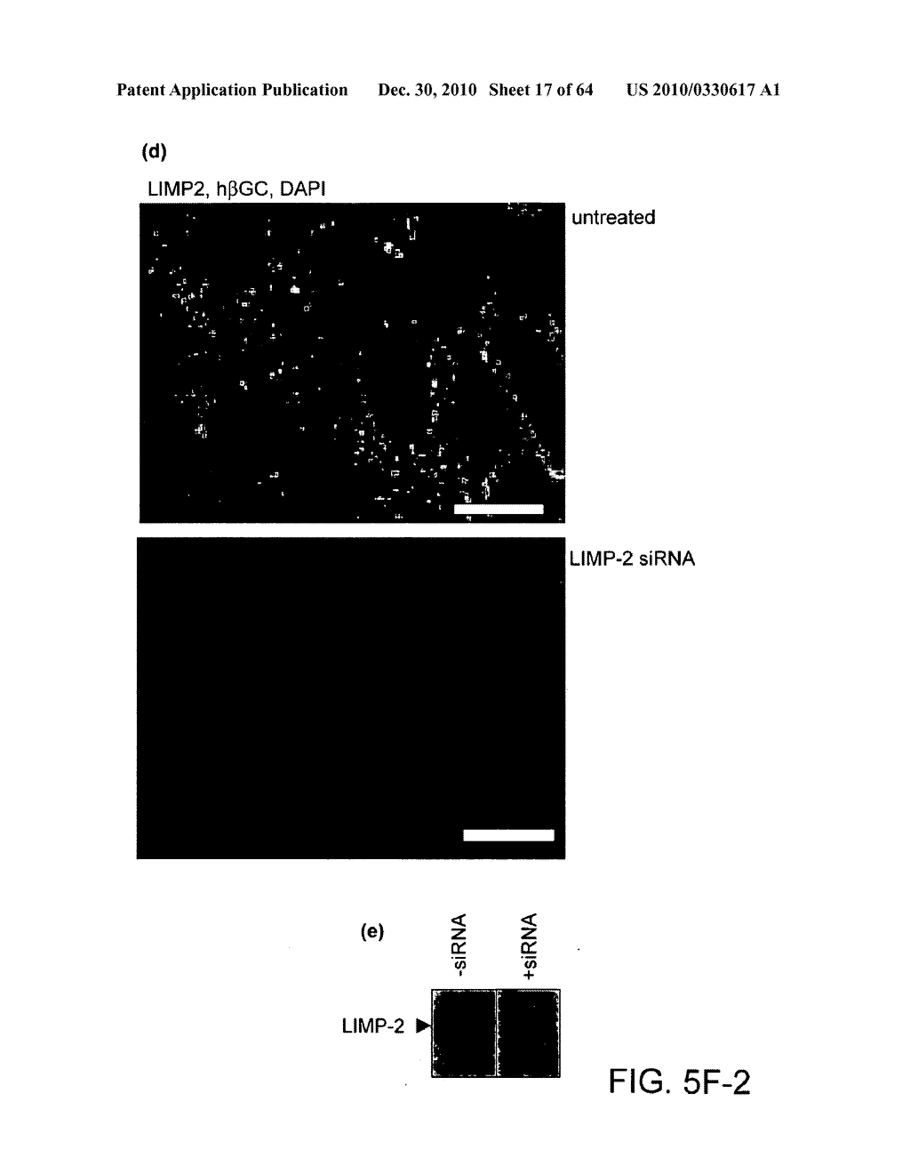 Methods of Producing a Secreted Protein - diagram, schematic, and image 18