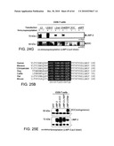 Methods of Producing a Secreted Protein diagram and image