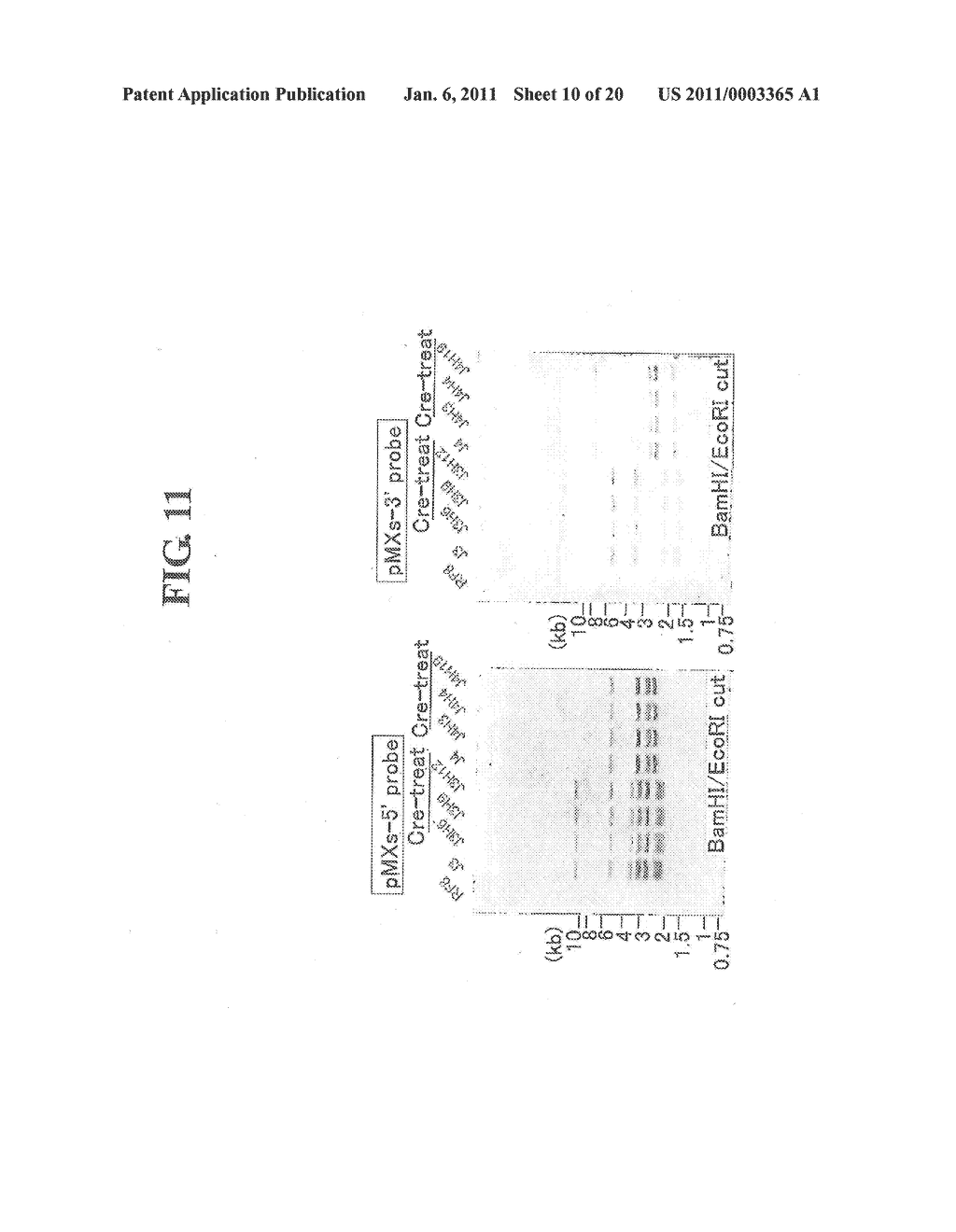 METHOD OF PREPARING INDUCED PLURIPOTENT STEM CELLS DEPRIVED OF REPROGRAMMING GENE - diagram, schematic, and image 11