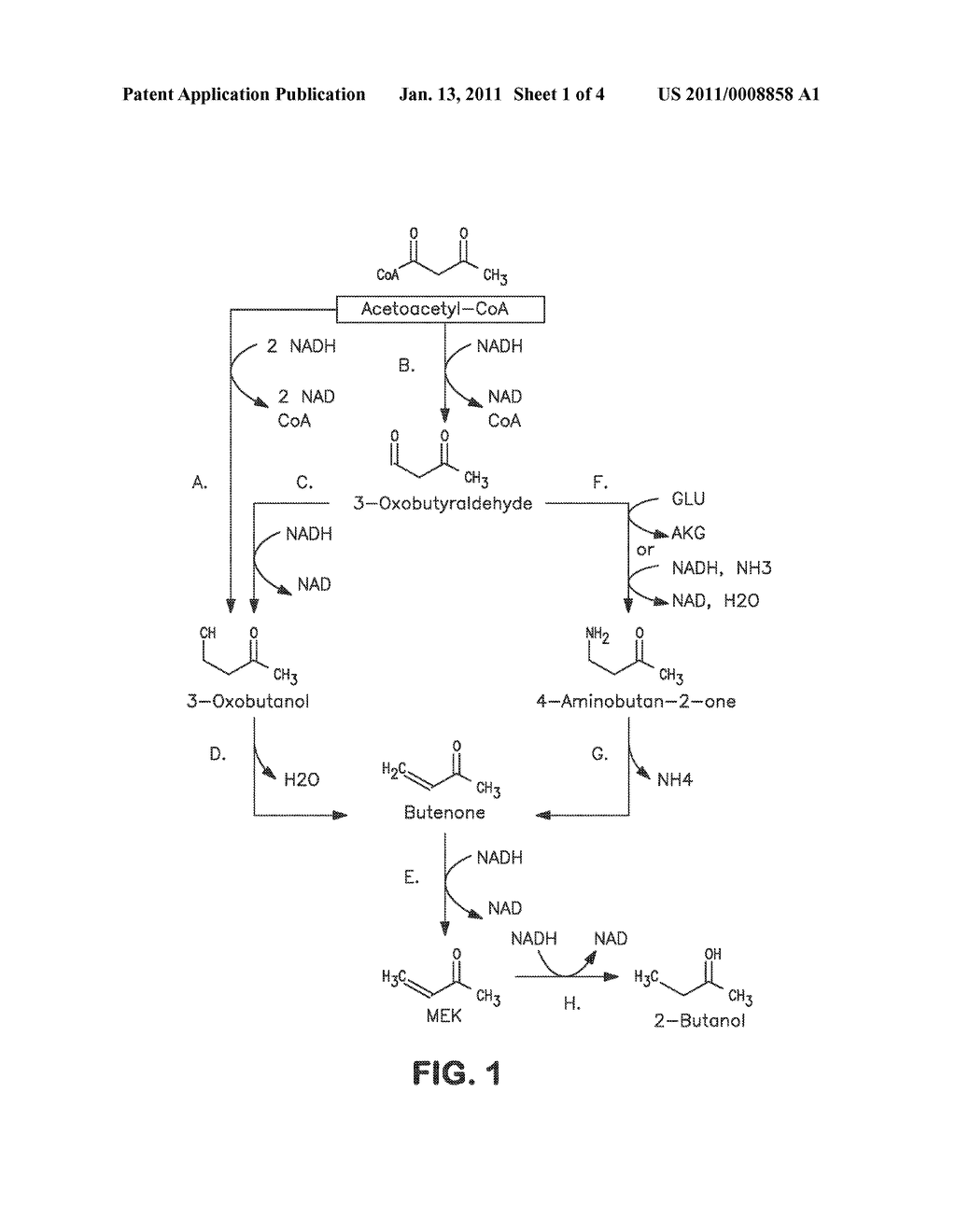 MICROORGANISMS AND METHODS FOR CARBON-EFFICIENT BIOSYNTHESIS OF MEK AND 2-BUTANOL - diagram, schematic, and image 02