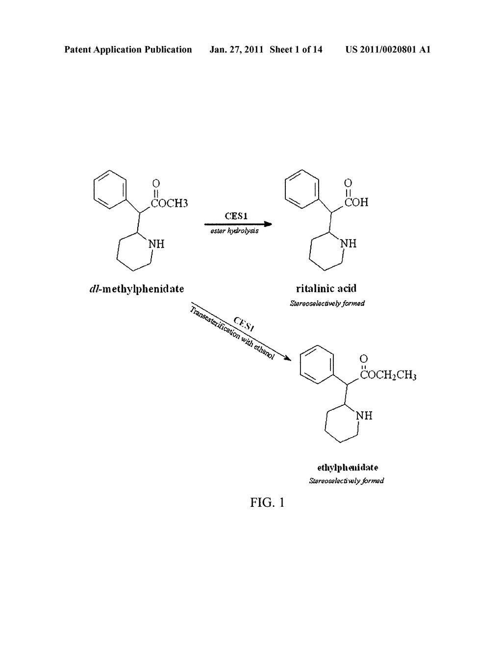 Carboxylesterase-1 Polymorphisms and Methods of Use Therefor - diagram, schematic, and image 02