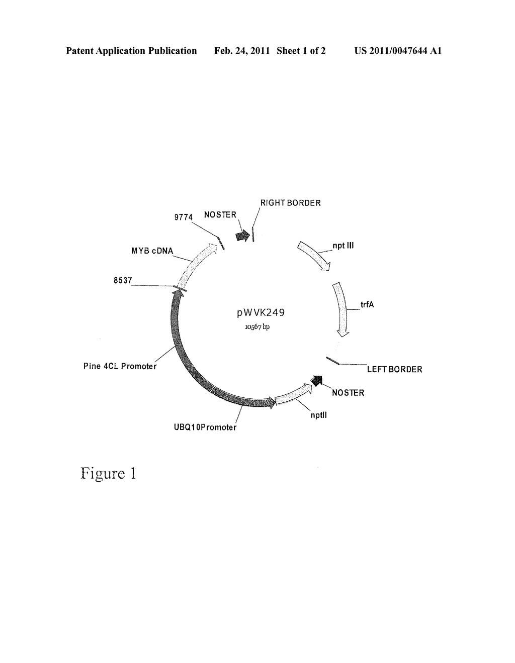 COMPOSITIONS AND METHODS FOR THE MODIFICATION OF GENE TRANSCRIPTION - diagram, schematic, and image 02