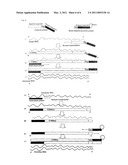 Method and Kit for Detection/Quantification of Target RNA diagram and image