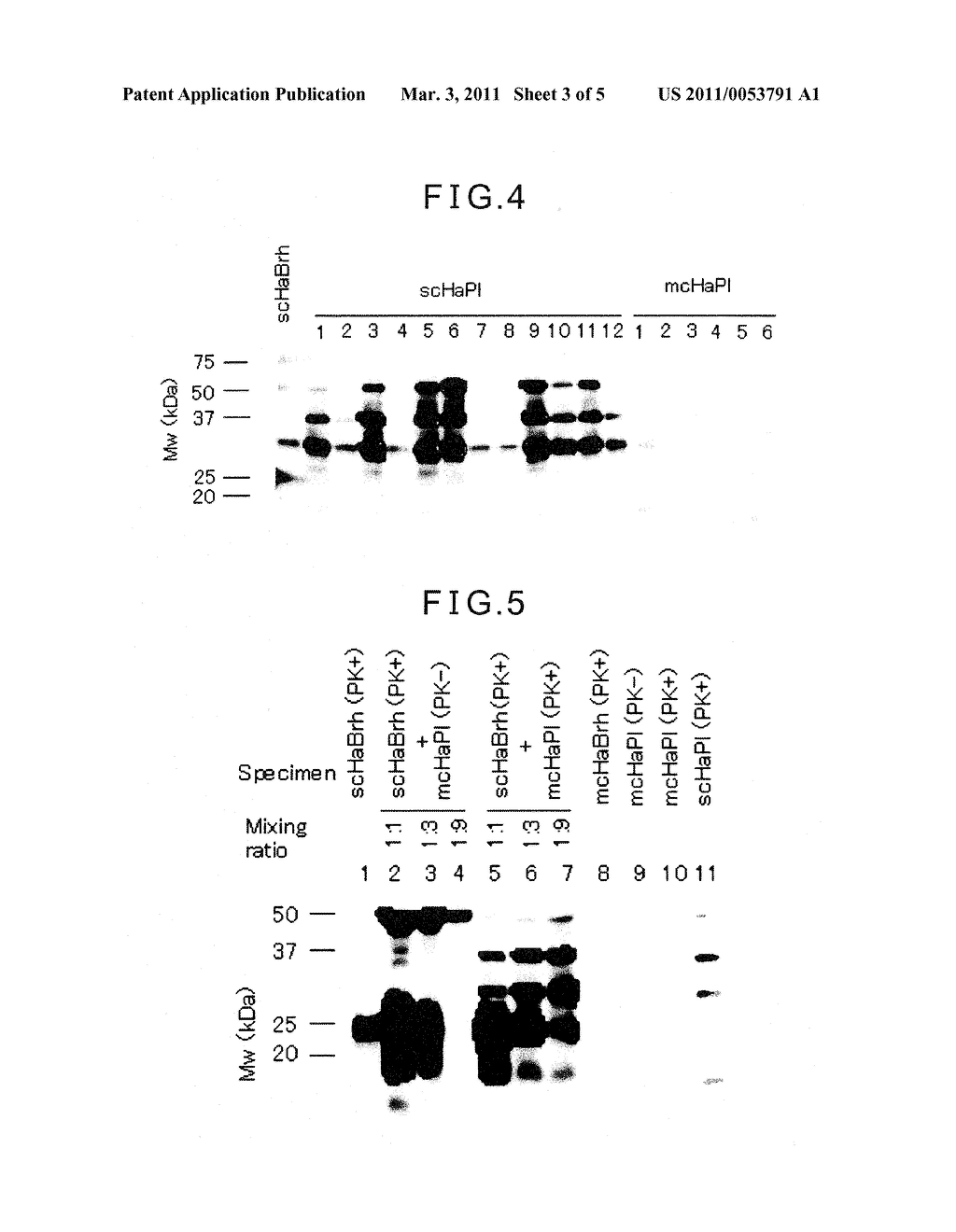 METHOD FOR DETECTING OR DETERMINING ABNORMAL PRION PROTEIN ASSOCIATED WITH TRANSMISSIBLE SPONGIFORM ENCEPHALOPATHY IN BLOOD-DERIVED SPECIMEN OR BODY FLUID-DERIVED SPECIMEN - diagram, schematic, and image 04