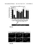 CHK1 SUPPRESSES A CASPASE-2 APOPTOTIC RESPONSE TO DNA DAMAGE THAT BYPASSES P53, BCL-2 AND CASPASE-3 diagram and image