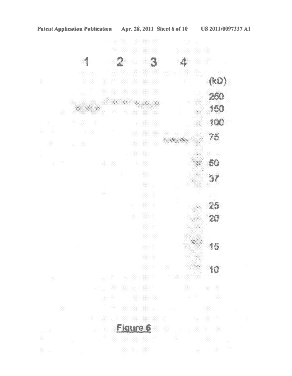 Composition for eliciting a specific ctl response, comprising a lympho-ablative compound and a molecule that contains antigenic sequences and targets professional antigen presenting cells - diagram, schematic, and image 07