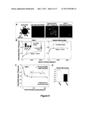 Protection of Nano-Scale Particles from Immune Cell Uptake diagram and image