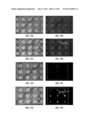 EX VIVO MULTI-DIMENSIONAL SYSTEM FOR THE SEPARATION AND ISOLATION OF CELLS, VESICLES, NANOPARTICLES AND BIOMARKERS diagram and image