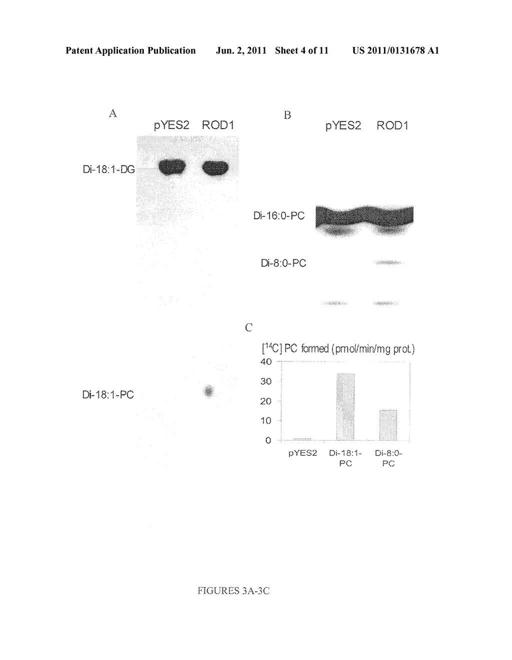 COMPOSITIONS AND METHODS FOR DIFFERENTIAL REGULATION OF FATTY ACID     UNSATURATION IN MEMBRANE LIPIDS AND SEED OIL - diagram, schematic, and image 05
