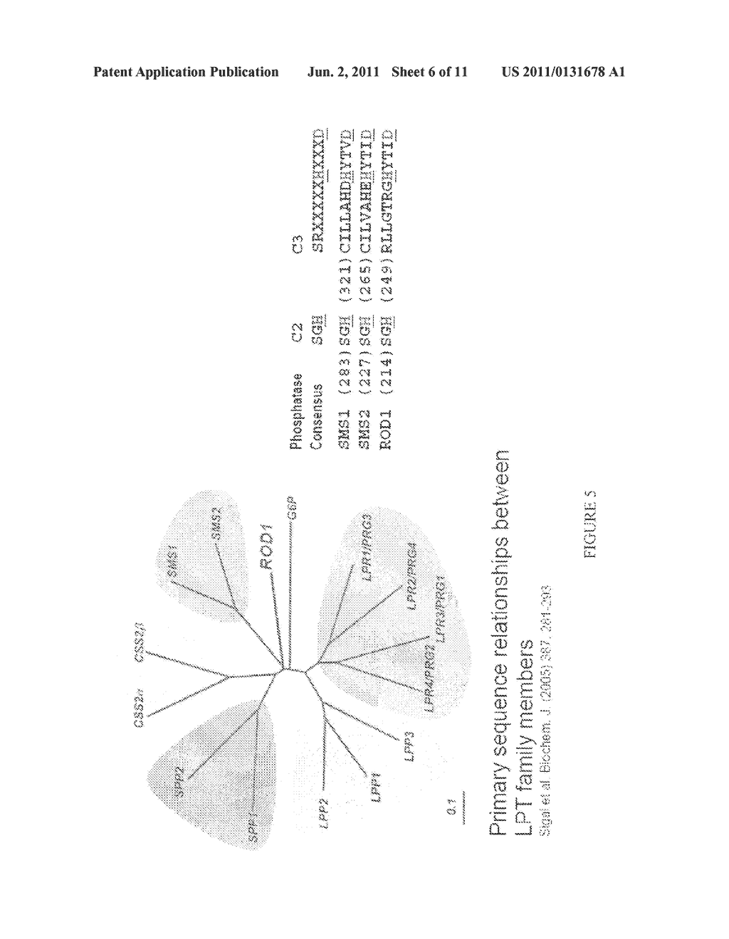 COMPOSITIONS AND METHODS FOR DIFFERENTIAL REGULATION OF FATTY ACID     UNSATURATION IN MEMBRANE LIPIDS AND SEED OIL - diagram, schematic, and image 07