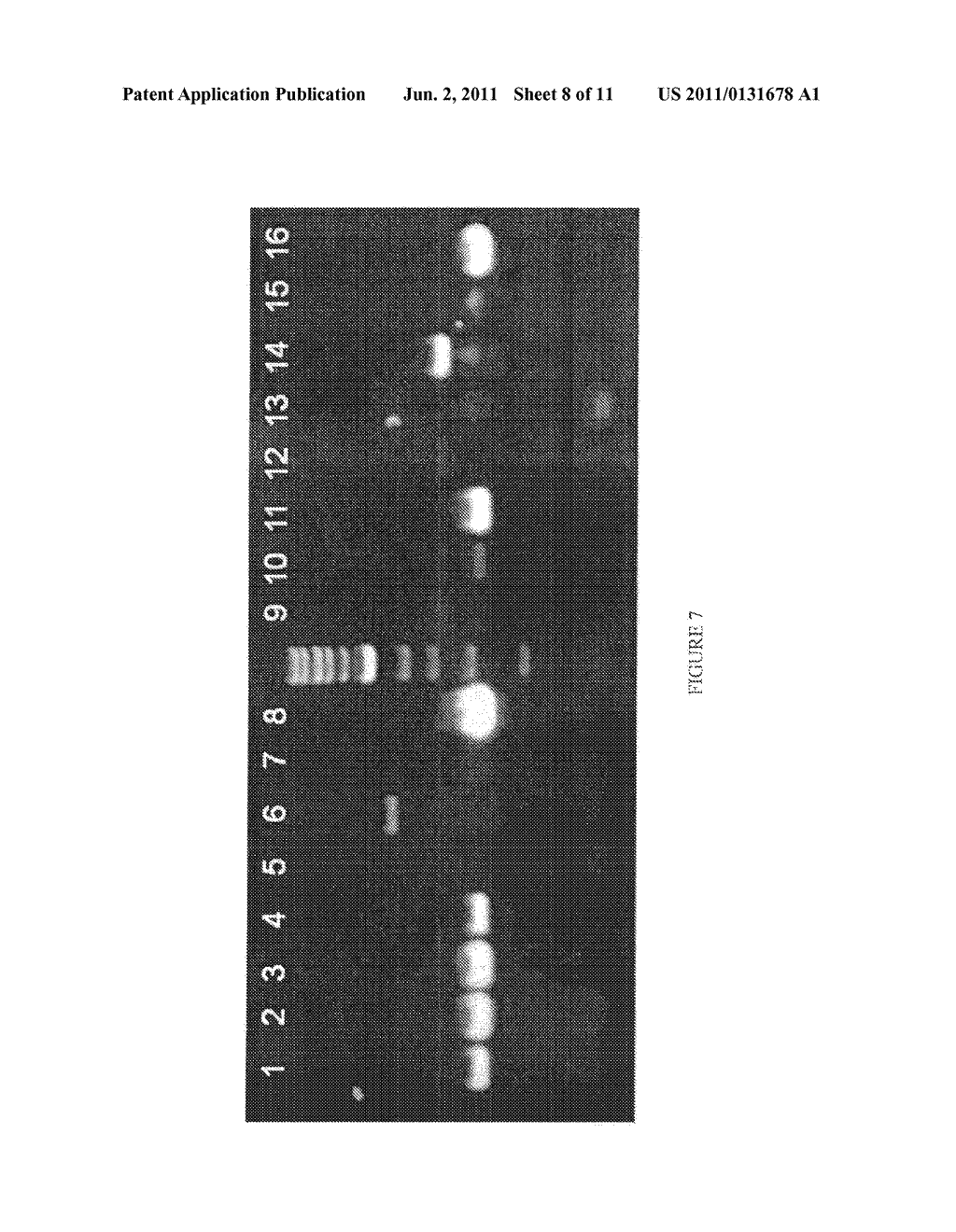 COMPOSITIONS AND METHODS FOR DIFFERENTIAL REGULATION OF FATTY ACID     UNSATURATION IN MEMBRANE LIPIDS AND SEED OIL - diagram, schematic, and image 09