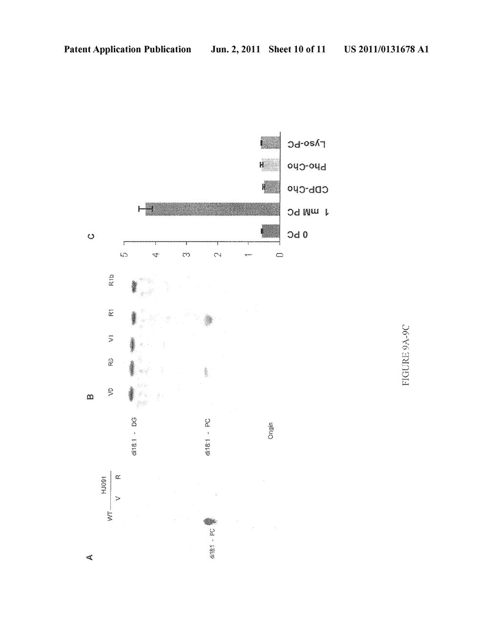 COMPOSITIONS AND METHODS FOR DIFFERENTIAL REGULATION OF FATTY ACID     UNSATURATION IN MEMBRANE LIPIDS AND SEED OIL - diagram, schematic, and image 11