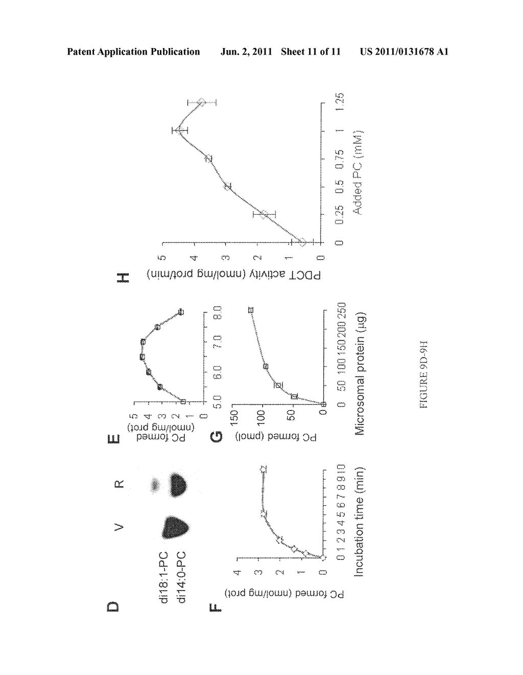 COMPOSITIONS AND METHODS FOR DIFFERENTIAL REGULATION OF FATTY ACID     UNSATURATION IN MEMBRANE LIPIDS AND SEED OIL - diagram, schematic, and image 12