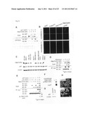 GENES AND POLYPEPTIDES RELATING TO BREAST CANCERS diagram and image