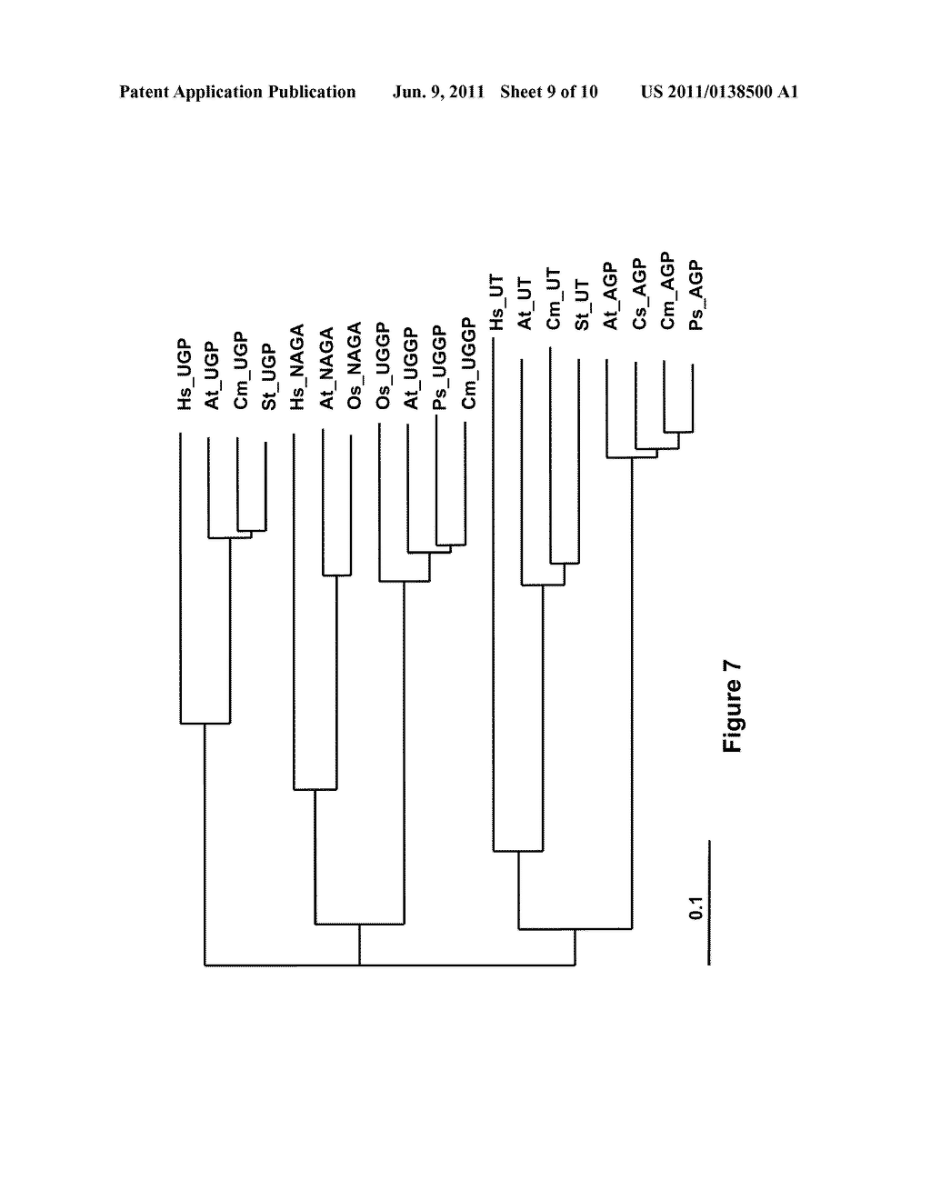 POLYNUCLEOTIDES AND POLYPEPTIDES ENCODED THEREFROM AND METHODS OF USING     SAME FOR INCREASING BIOMASS IN PLANTS AND PLANTS GENERATED THEREBY - diagram, schematic, and image 10