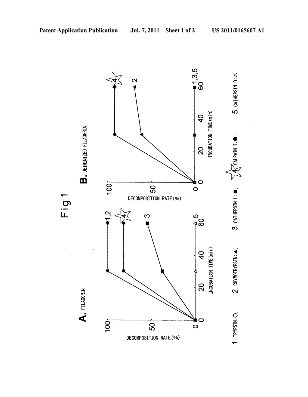 METHOD FOR EVALUATING STATUS OF SKIN BARRIER FUNCTION OF NATURAL     MOISTURIZING FACTOR USING BLEOMYCIN HYDROLASE ACTIVITY AS INDICATOR - diagram, schematic, and image 02