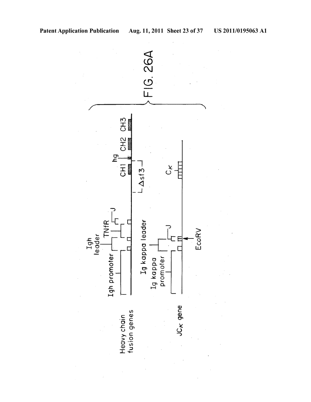 Methods of Treating Ankylosing Spondylitis Using Anti-TNF Antibodies and     Peptides of Human Tumor Necrosis Factor - diagram, schematic, and image 24