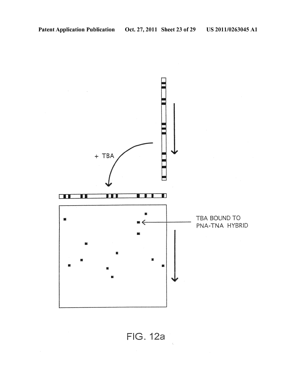 Method of Detection of Nucleic Acids With a Specific Sequence Composition - diagram, schematic, and image 24