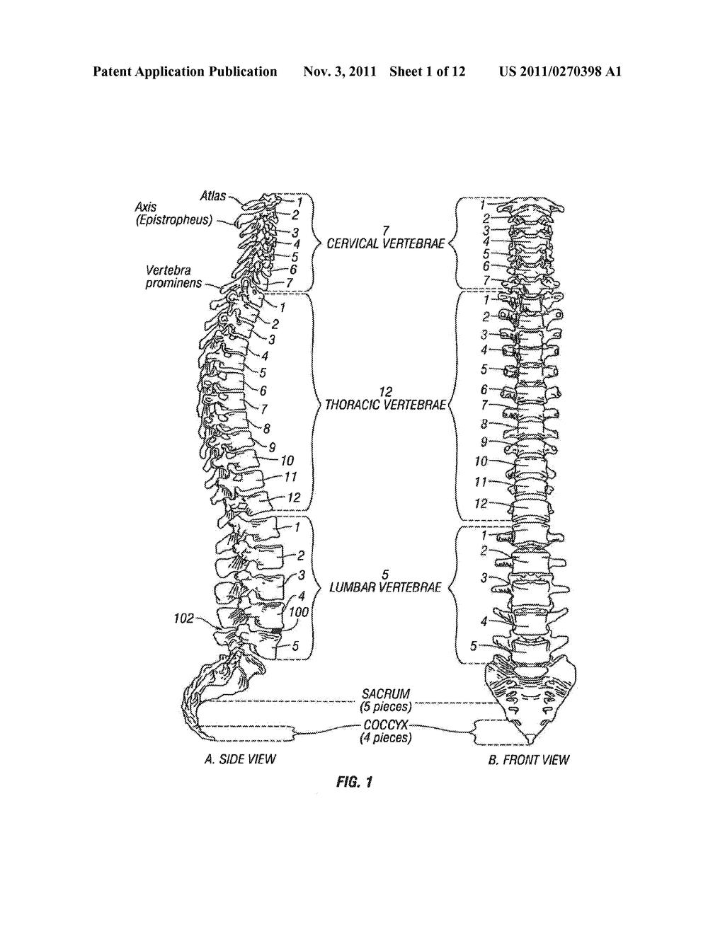 diagram spine