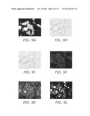 System, method, and kit for processing a magnified image of biological     material to identify components of a biological object diagram and image