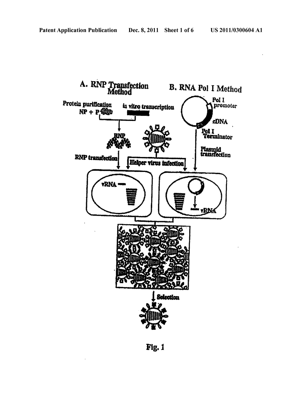 RECOMBINANT INFLUENZA VECTORS WITH TANDEM TRANSCRIPTION UNITS - diagram, schematic, and image 02