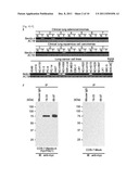 NECTIN-4 FOR TARGET GENES OF CANCER THERAPY AND DIAGNOSIS diagram and image