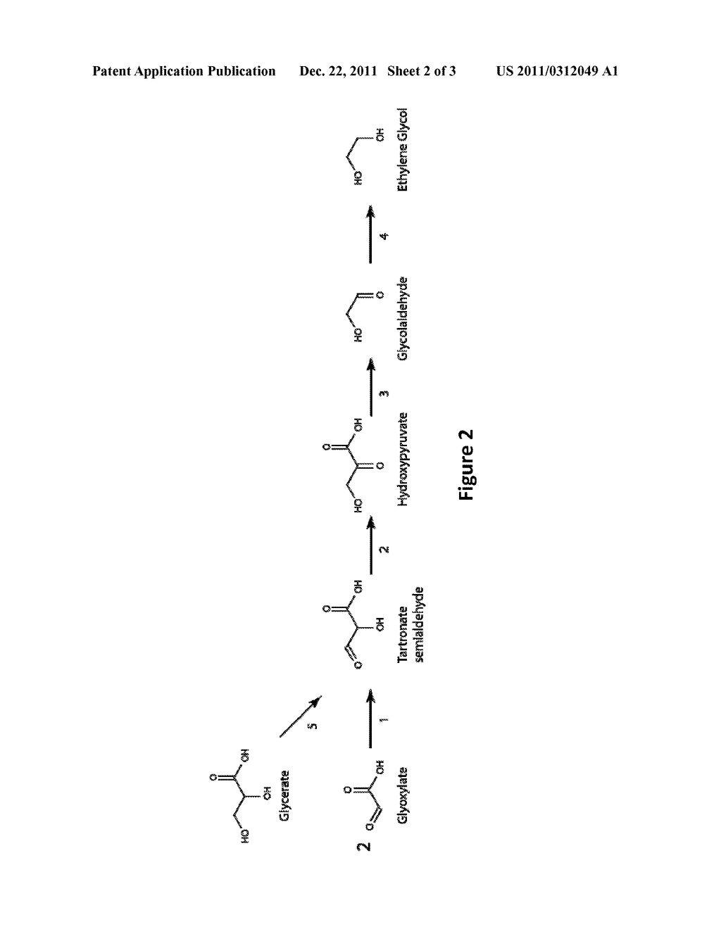 MICROORGANISMS AND METHODS FOR THE PRODUCTION OF ETHYLENE GLYCOL - diagram, schematic, and image 03