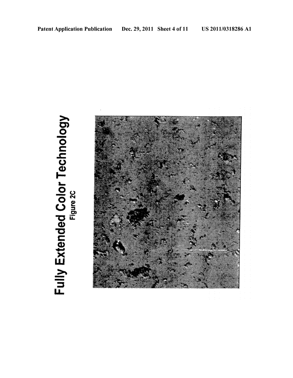 SPF ENHANCED EXTENDED COLOR BULK POWDERS AND METHODS OF MAKING THEREOF - diagram, schematic, and image 05