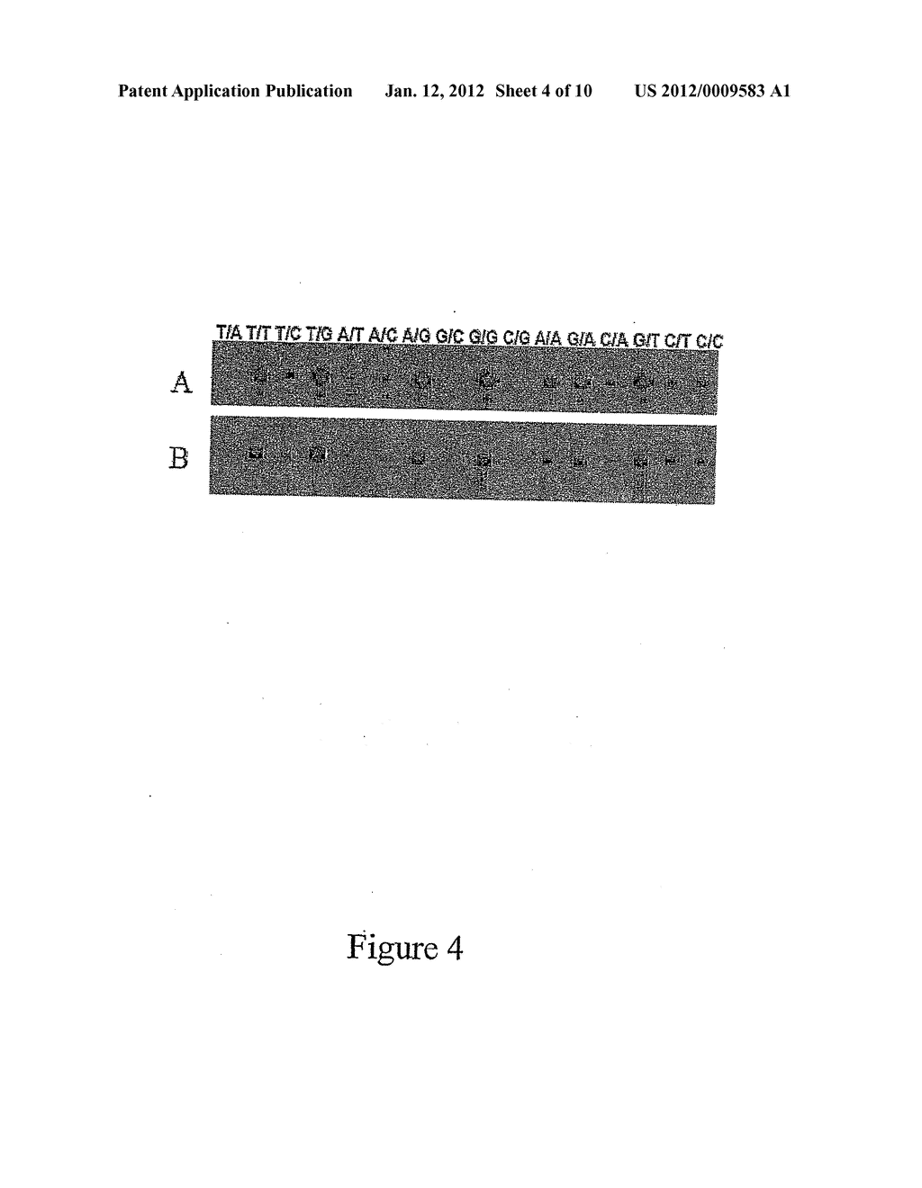 Method for Producing Highly Sensitive Endonucleases, Novel Preparations of     Endonucleases and Uses Thereof - diagram, schematic, and image 05